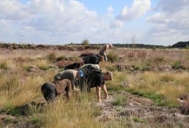 Spinnenvereniging Arabel, Natuurpunt en ANB slaan handen in elkaar voor het behoud van de  Lentevuurspin in Bosland