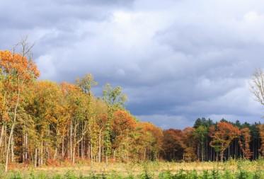 Belgisch biodiversiteitsexperiment werpt eerste vruchten af